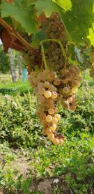 Ochutnávka vín 1